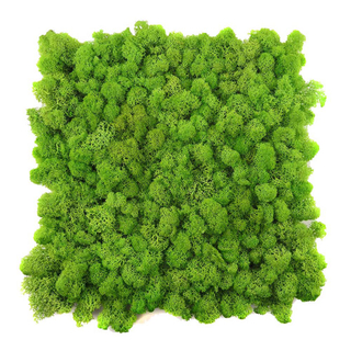 Preserevd Moss Panel-Yellow Green