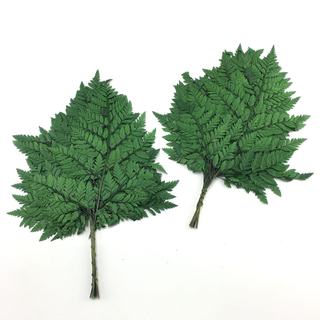 Small Preserved Fern