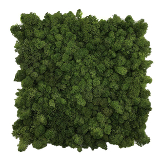 Preserevd Moss Panel-Forest Green